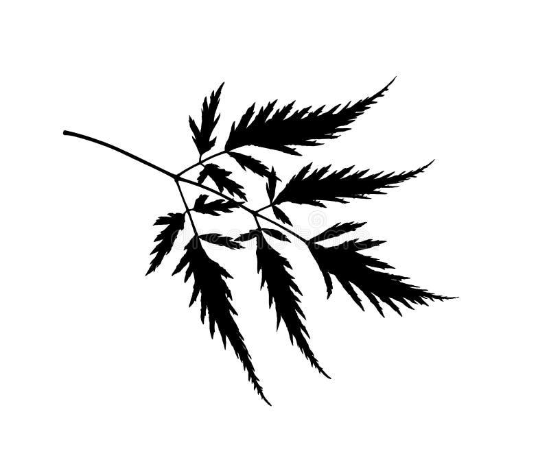 Niederlassung mit der schwarzen Schattenbildillustration der Blätter lokalisiert auf weißem Hintergrund lizenzfreies stockbild