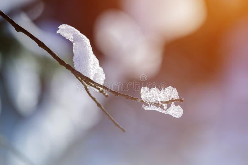 Niederlassung umfasst mit Schnee und Eis stockbild