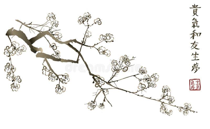Niederlassung von blühender Kirschblüte Japanischer Kirschbaum stock abbildung