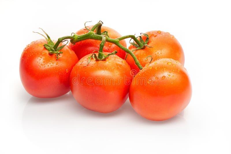 Niederlassung von roten Tomaten mit den Wassertropfen lokalisiert auf weißem Hintergrund stockfotos