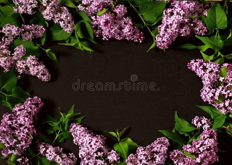 Niederlassungen der Flieder auf einem schwarzen Hintergrund stockfoto