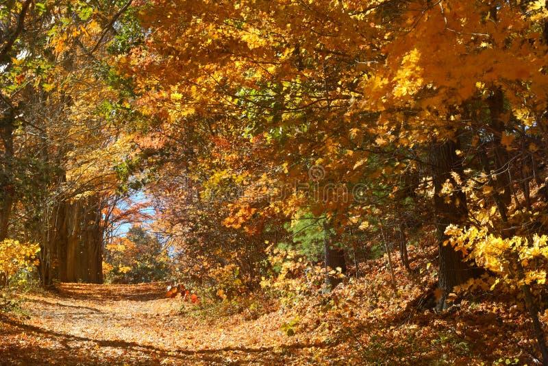 Niederlassungen des Herbstlaubs bilden einen Tunnel, Mansfield-Höhle, Connec stockfotografie