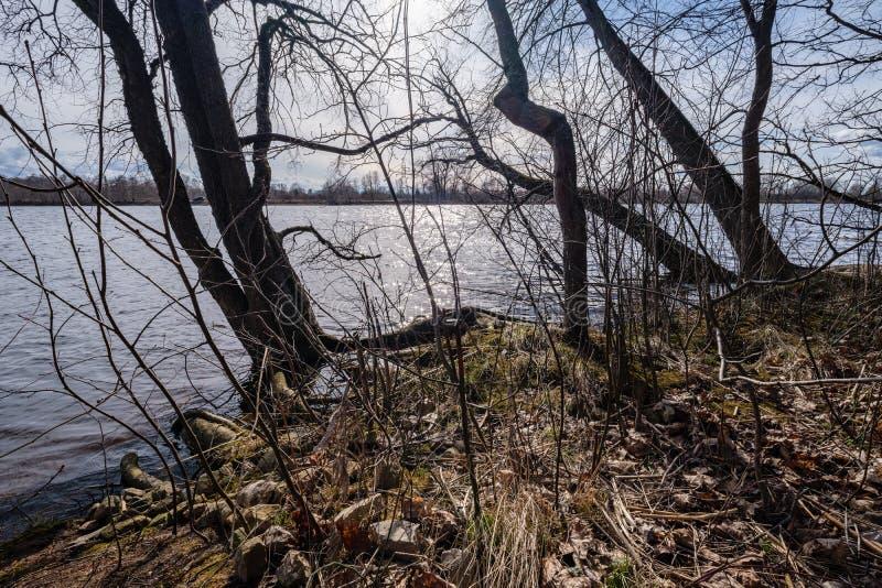 Niederlassungen des kahlen Baums in den Sonnenuntergangfarben gegen ruhiges glänzendes Wasser lizenzfreies stockfoto
