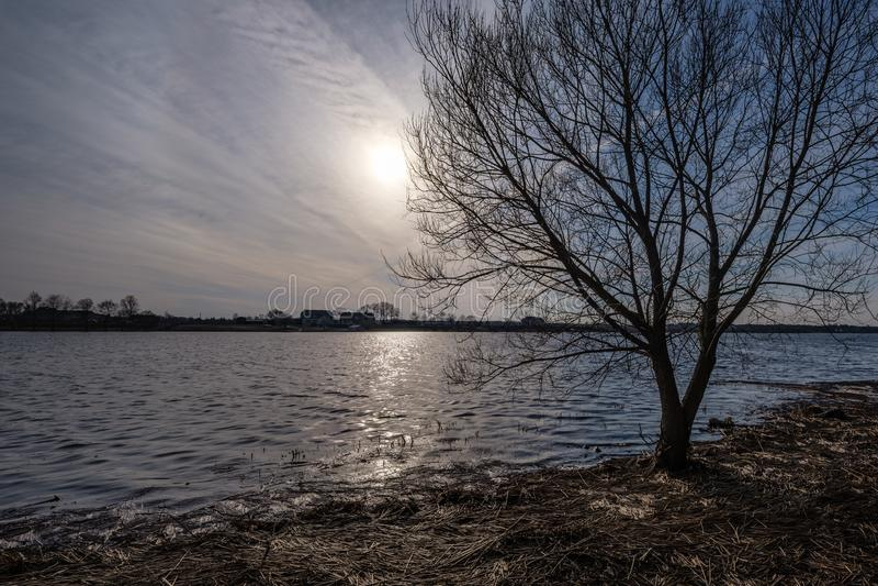 Niederlassungen des kahlen Baums in den Sonnenuntergangfarben gegen ruhiges glänzendes Wasser stockfoto