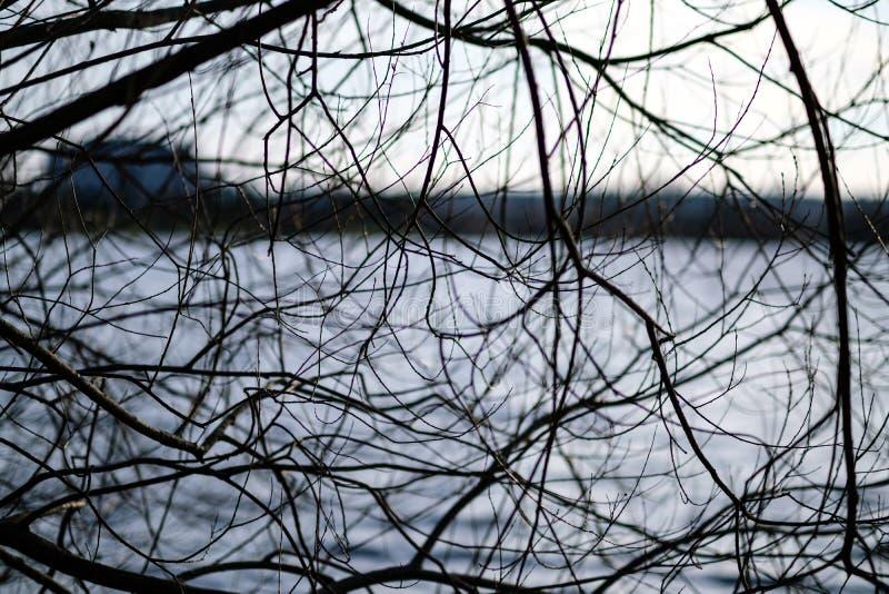 Niederlassungen des kahlen Baums in den Sonnenuntergangfarben gegen ruhiges glänzendes Wasser stockbilder