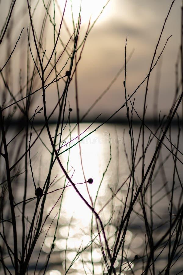 Niederlassungen des kahlen Baums in den Sonnenuntergangfarben gegen ruhiges glänzendes Wasser stockfotografie