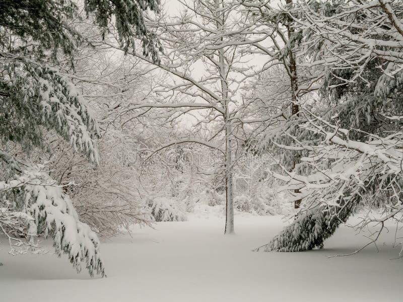 Niederlassungen des Schnees lizenzfreie stockfotografie