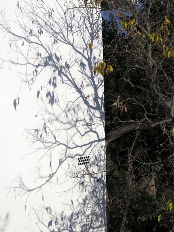 Niederlassungen, die Schatten auf weiße Wand im andalusischen Wintersonnenschein verlängern stockbilder