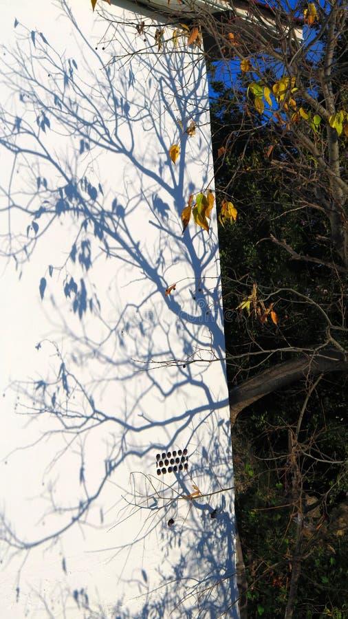 Niederlassungen, die Schatten auf weiße Wand im andalusischen Wintersonnenschein verlängern lizenzfreies stockbild