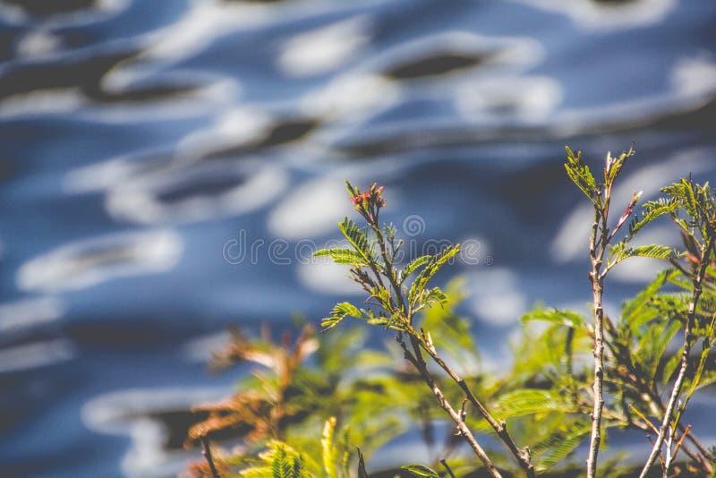 Niederlassungen durch den Fluss lizenzfreies stockbild