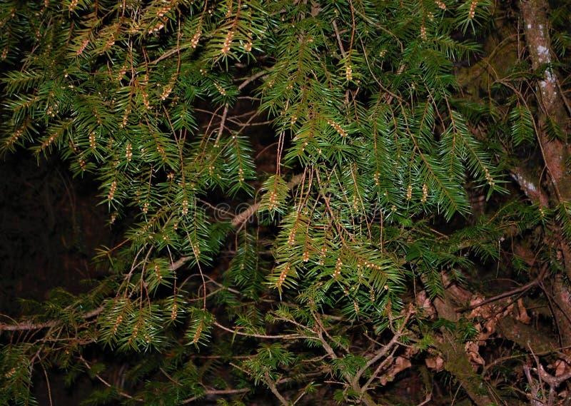 Niederlassungen einer Baumvertretungsschaffung und der Schönheit der Natur stockfotos