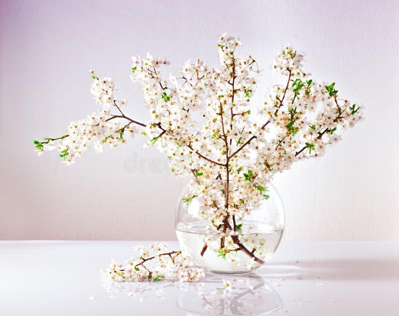 Niederlassungen eines blühenden Apfelbaums in einem Glasvase mit Wasser stockfotos