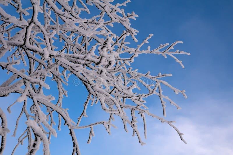 Niederlassungen mit Schnee und bewölktem Himmel stockbild