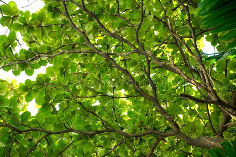 Niederlassungen und Blätter stockfotografie