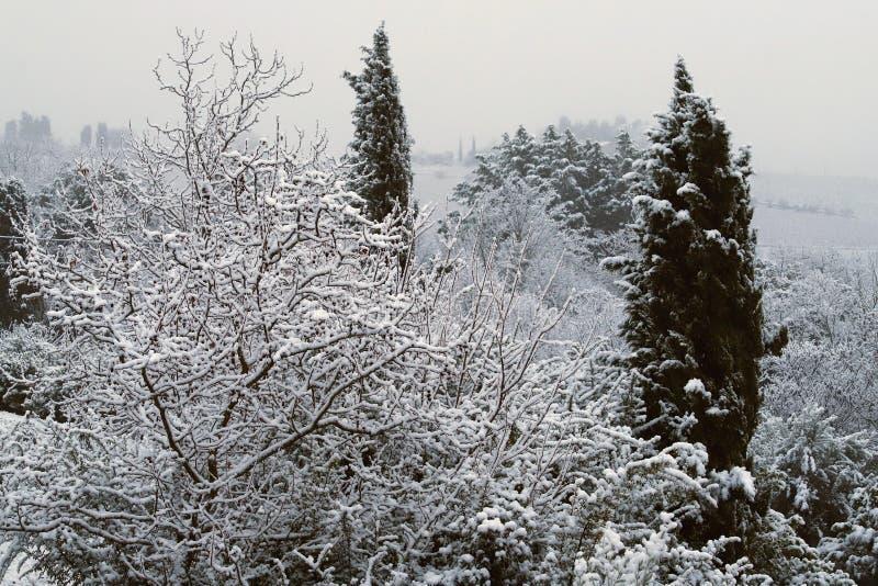 Niederlassungen von den Bäumen bedeckt durch Schnee in den toskanischen Hügeln nach Schneefällen eines Winters stockbild
