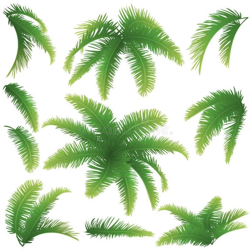 Niederlassungen von Palmen stock abbildung