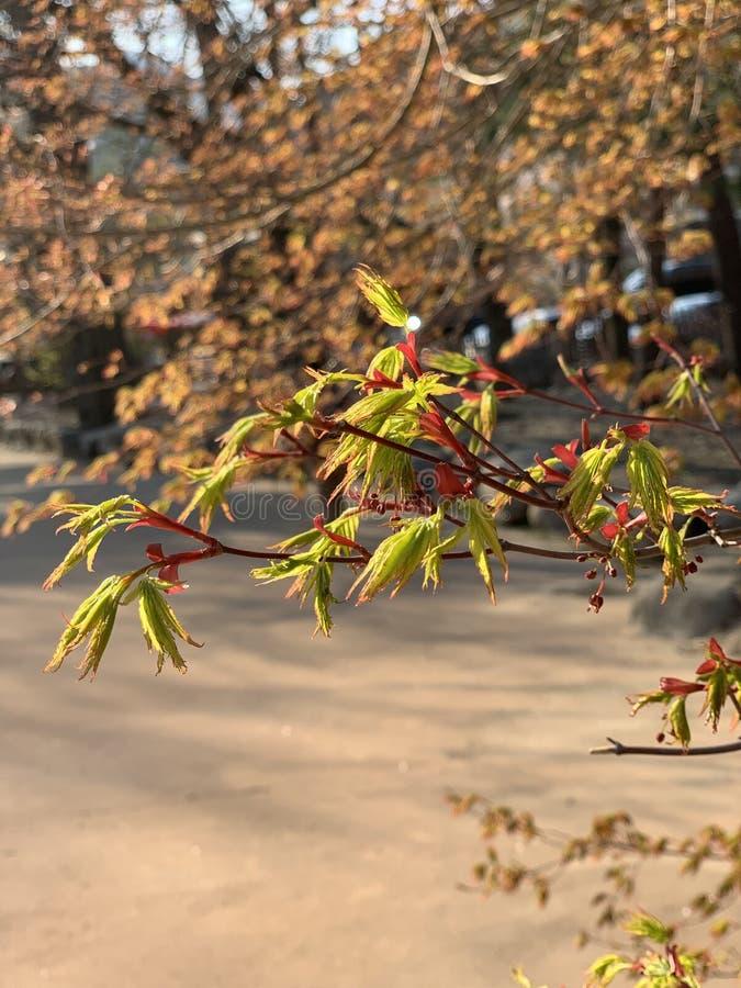 Niederlassungs-Nahaufnahme Blätter der gelben Blätter schauen rote schlank stockbilder