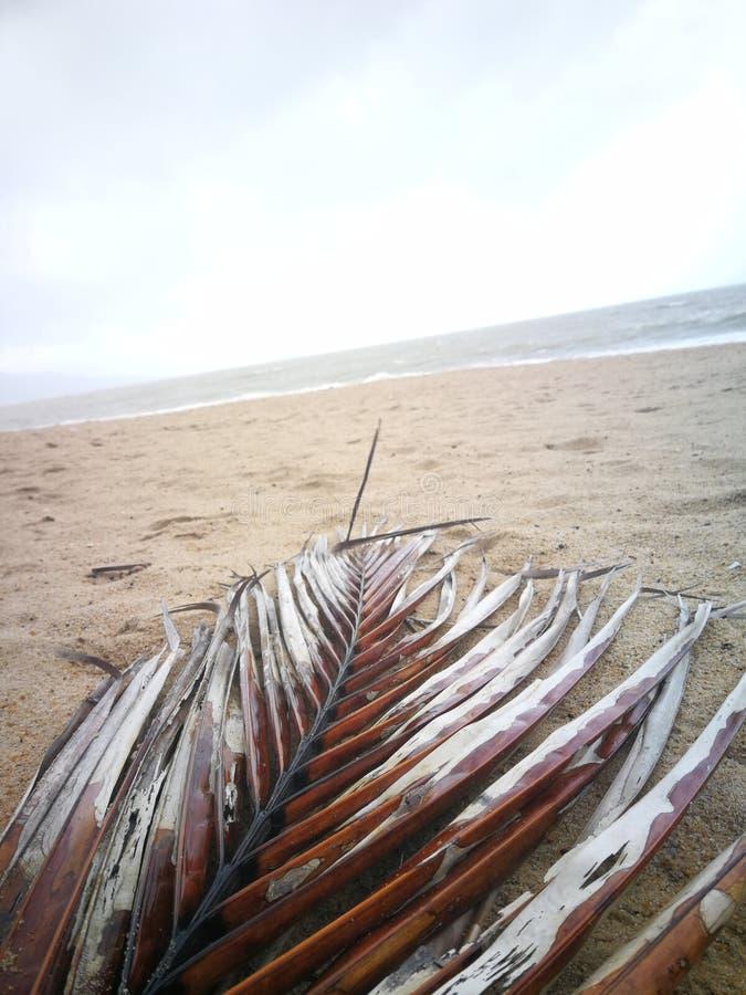 NiederlassungsPalme, die auf dem Sand auf dem Strand liegt lizenzfreie stockfotografie
