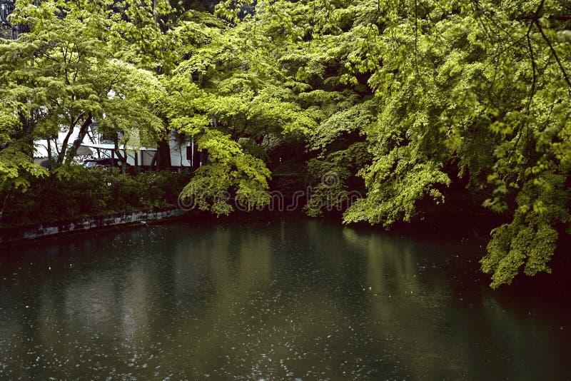 Niederschlag in Kyoto, Japan im Frühjahr stockbilder