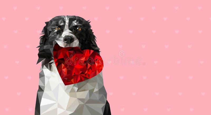 Niedrige Polyvektor-Illustration: Hund, der rotes Herz hält Schwarzweiss--Border collie auf süßer romantischer Valentinsgruß-Gruß stock abbildung
