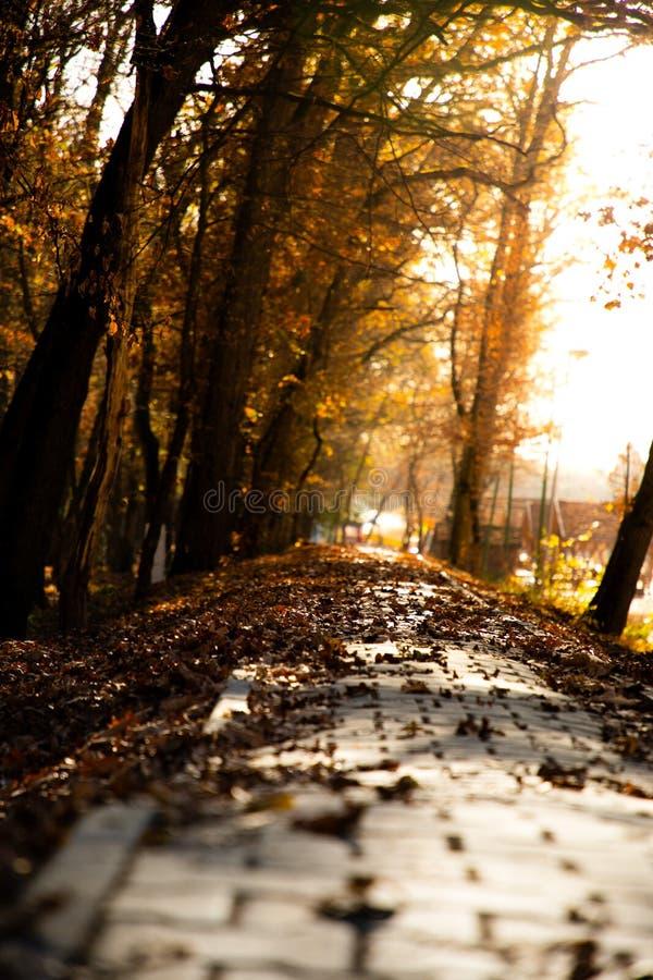 Niedrige Winkelsicht einer Herbststraße mit Sonnenunterganglicht stockfotografie