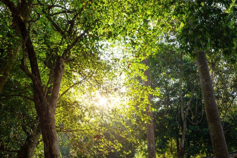 Niedriger Blickwinkel auf tropischen Baum mit grünen Blättern im Regenwald lizenzfreie stockfotografie