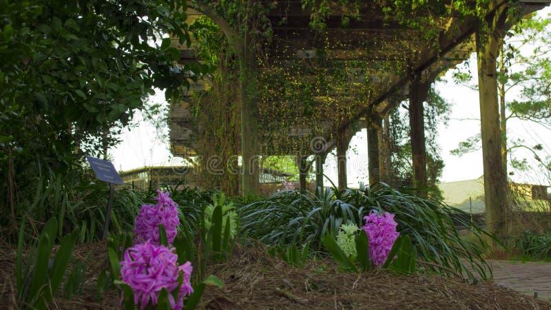 Niedriger Winkel der schönen Kap-Furcht-Gärten stockbild