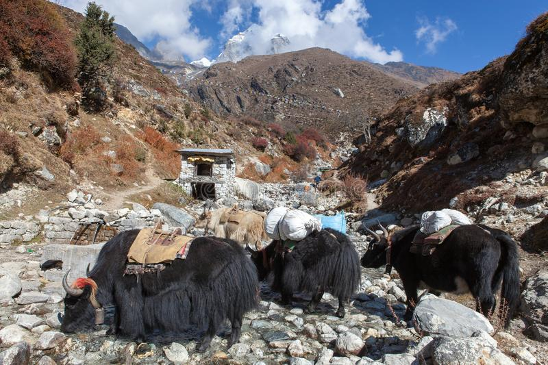 NIEDRIGES LAGER TREK/NEPAL EVEREST - 22. OKTOBER 2015 lizenzfreie stockfotos