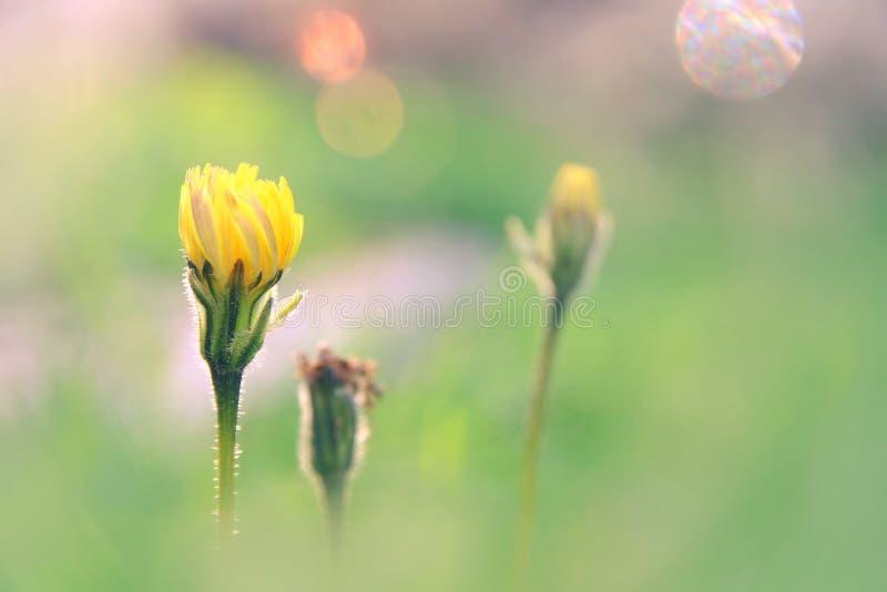 niedriges Winkelsichtbild des neuen Grases und des Frühlinges blüht Freiheits- und Erneuerungskonzept lizenzfreie stockbilder