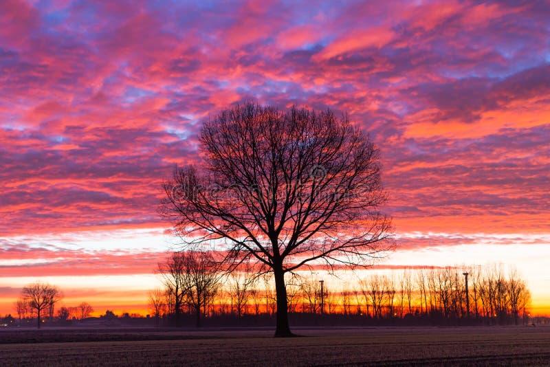 Niedziela zimny dzień zimowy samotne drzewo fotografia stock