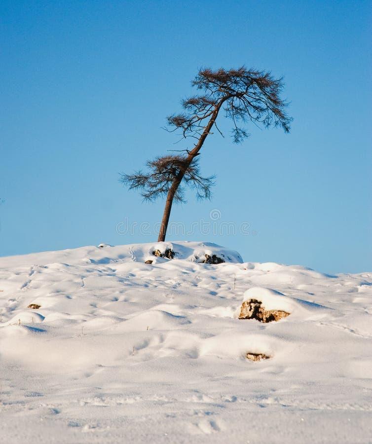 Download śnieg zdjęcie stock. Obraz złożonej z okręg, 1, przygoda - 12488134