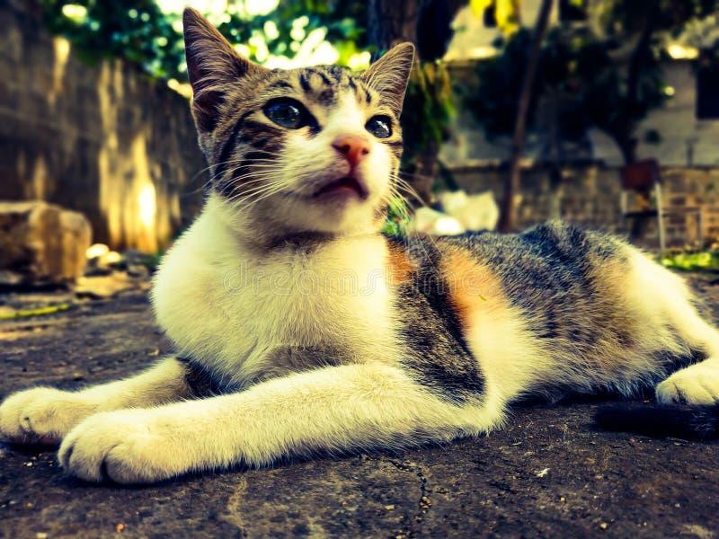 Niegrzeczny kot patrzy na mój aparat ze zdumieniem fotografia stock