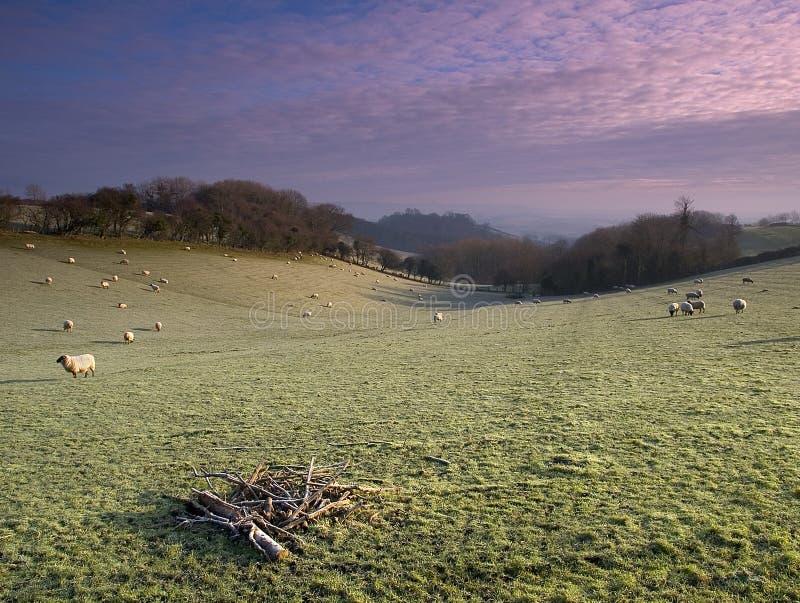 Download śniegurka owce obraz stock. Obraz złożonej z greenbacks - 129161