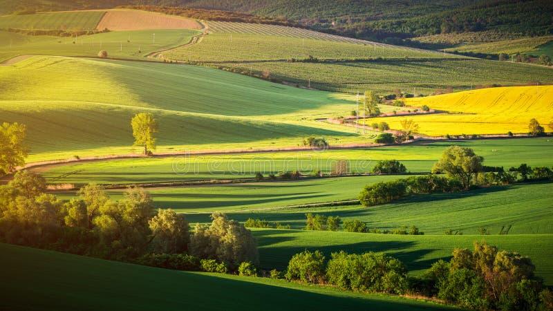 Niekończący się zieleni pola, Toczni wzgórza, ciągników ślada, wiosny ziemia zdjęcie stock