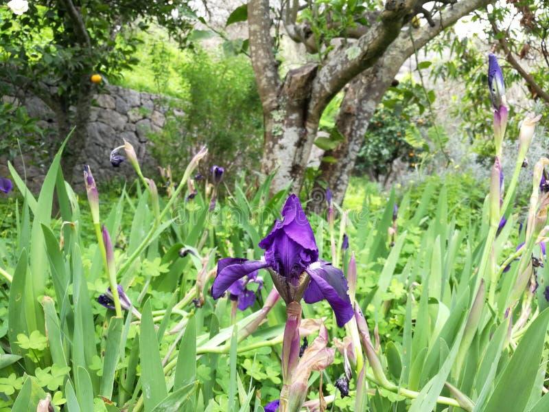 Niektóre ładni kwiaty wśród świrzep obrazy royalty free