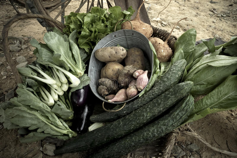Niektóre świezi warzywa zdjęcie stock