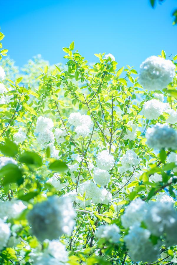 Niektóre biali kwiaty pod niebieskim niebem fotografia stock