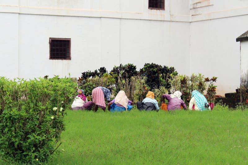 Niektóre Indiańskie damy uprawiają ogródek wokoło Se katedry Stary Goa fotografia stock