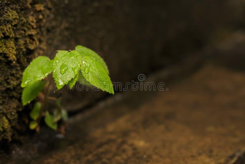 Niektóre roślina przyrost mocno zdjęcia royalty free