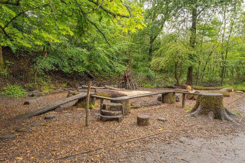 Niektóre Starzy Nieżywi drzewa Cią W górę tworzyć interes wśród drewien w Szkocja zdjęcie stock