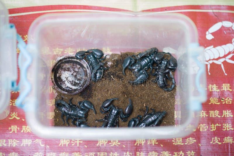 Niekt?re cesarz?w skorpiony, tak?e nazwany Pandinus imperator lub gigant?w lasowi czarni skorpiony w pude?ku w ulicznym rynku XI. zdjęcia royalty free