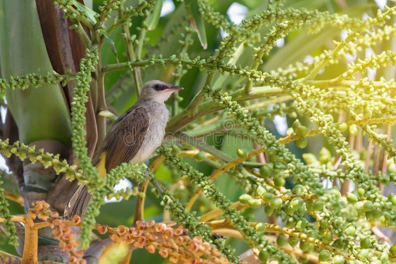 Nieletni śliczny ptasi tyczenie na drzewku palmowym obraz stock