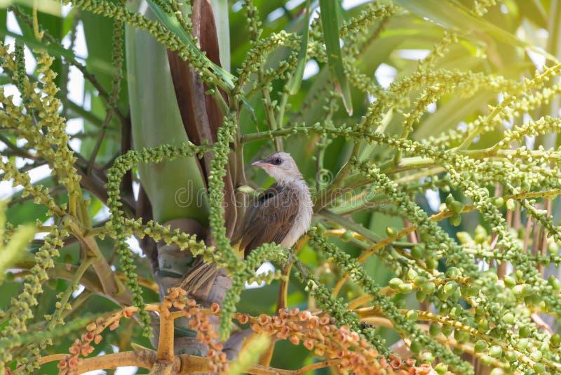 Nieletni śliczny ptasi tyczenie na drzewku palmowym fotografia royalty free