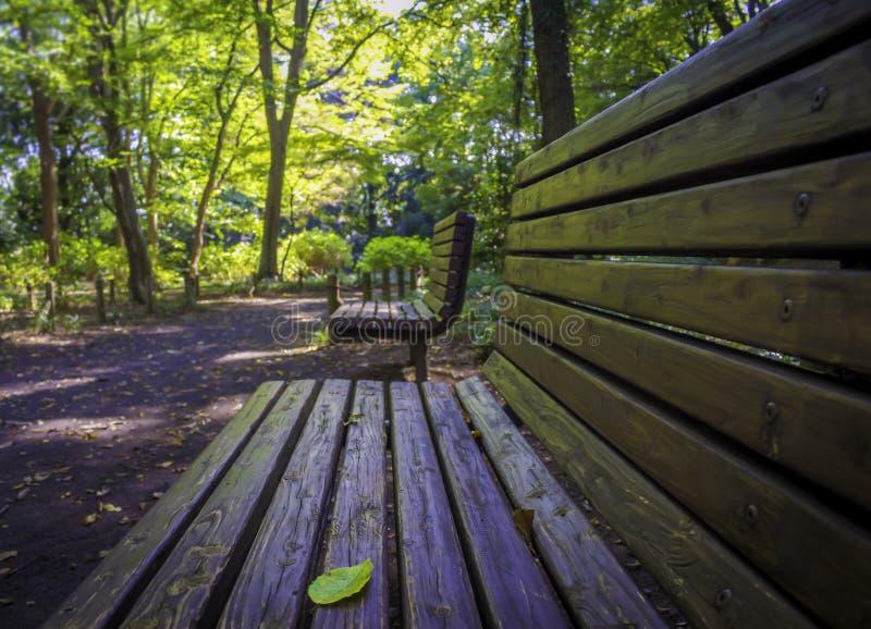 Niemand houten bank binnen onder het bos royalty-vrije stock afbeelding