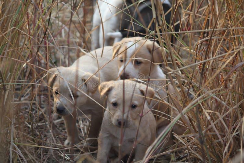 Niemand kan de puppyogen slaan!! stock afbeelding