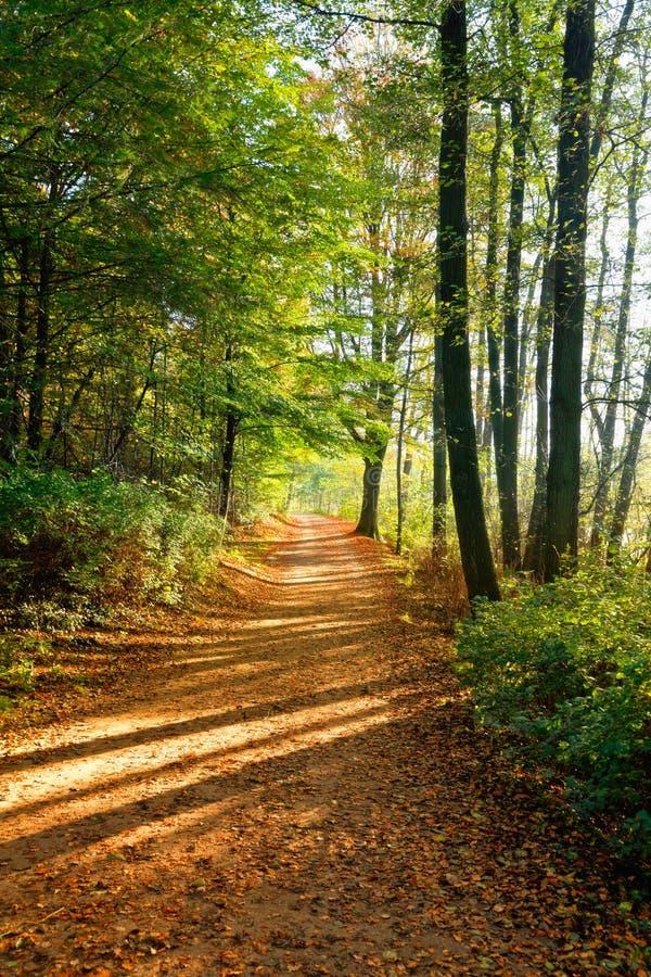 Niemcy, jesień las, ścieżka fotografia royalty free