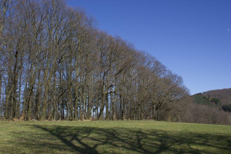 Niemiec krajobrazowy Odenwald obrazy stock