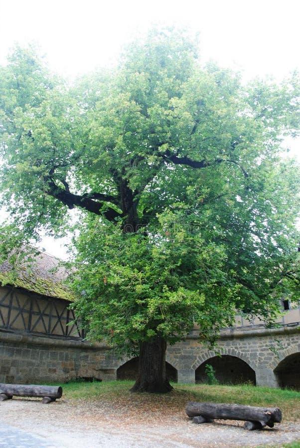 Niemiecki drzewo zdjęcia royalty free