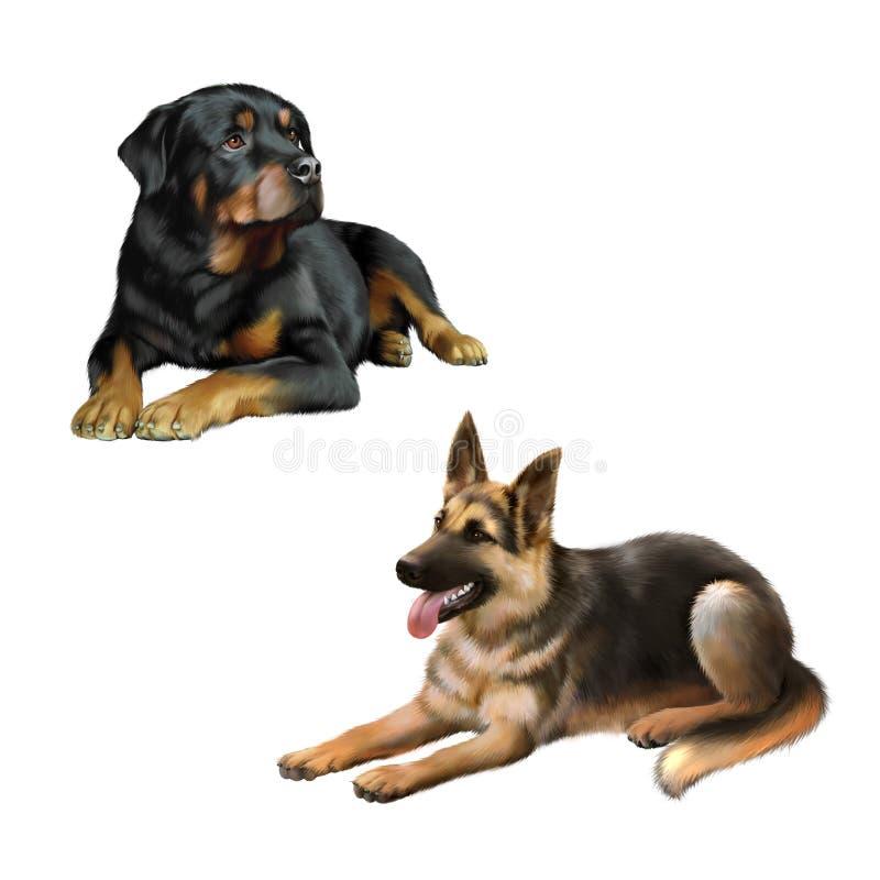 Niemiecki shepard pies, Rottweiler kłaść w dół i ilustracja wektor