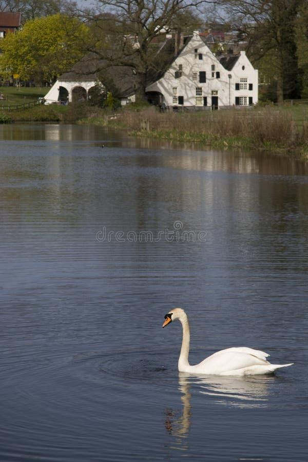Niemy łabędź w St. Jansbeek w Sonsbeek parku obraz stock